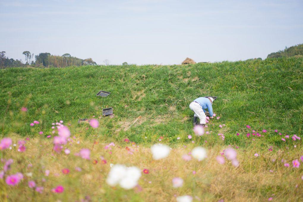 矢勝川の環境を守る会